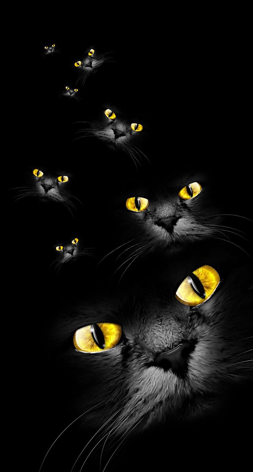 eye, pet