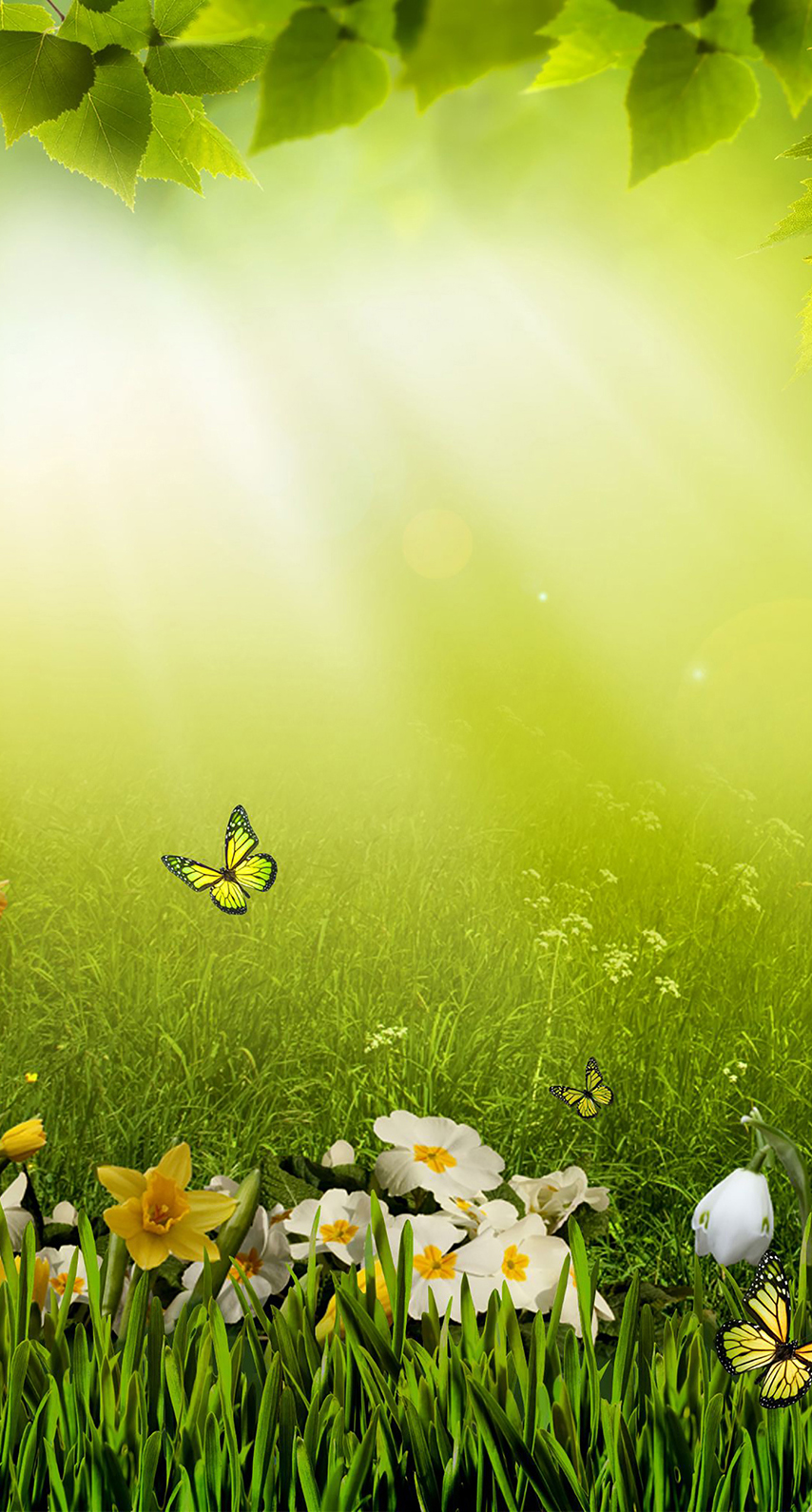 bright, spring, meadow, summer, morning, park, sun, no person, dawn, fair weather