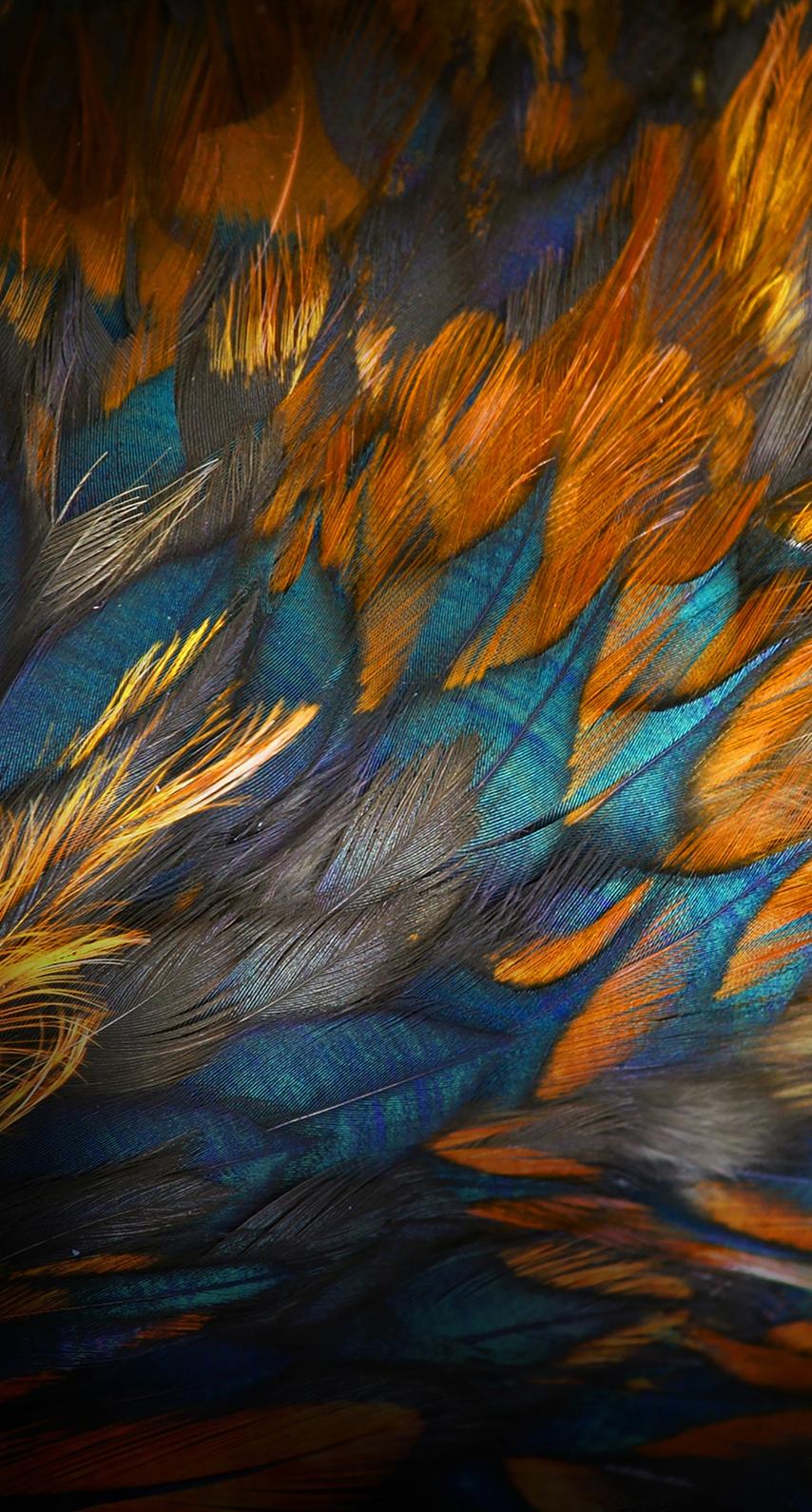 bird, texture, school, abstract, fall