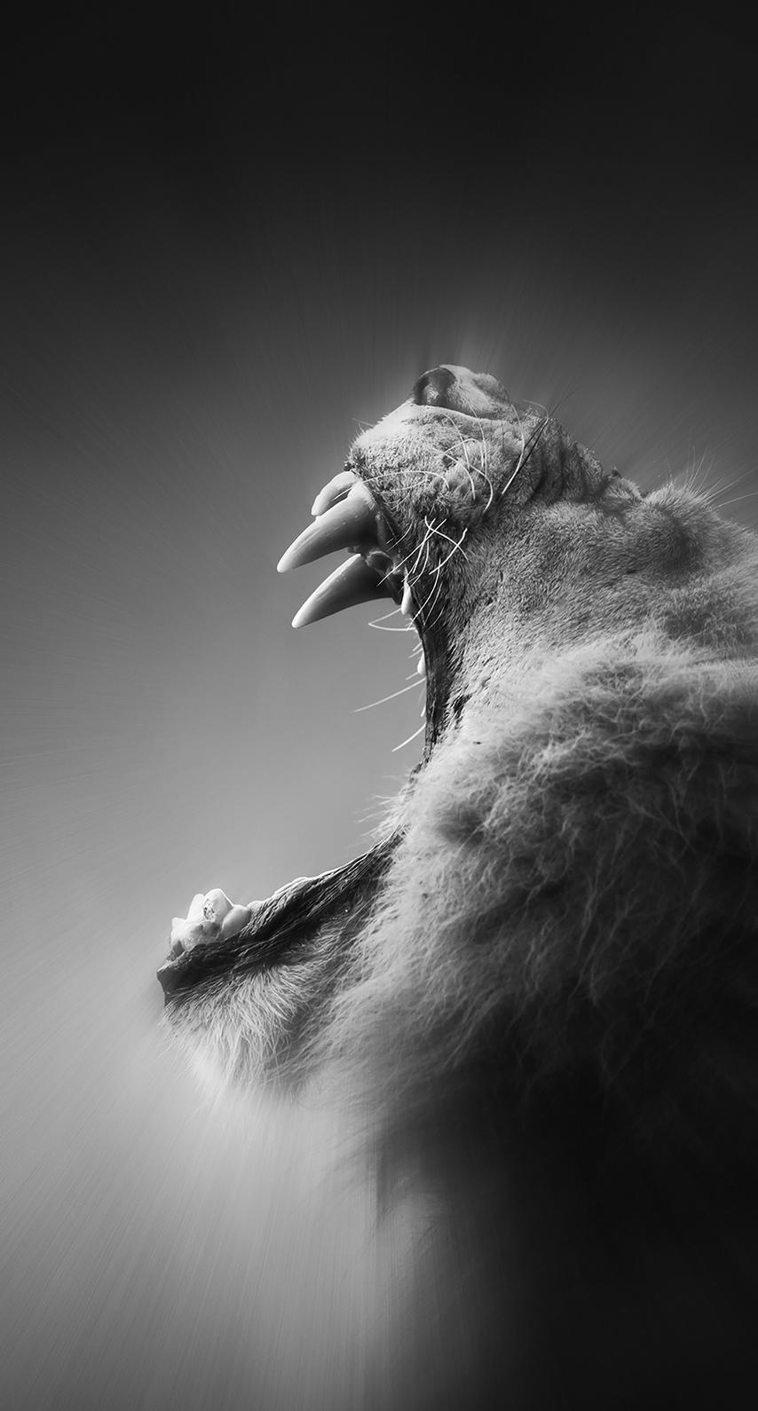 wildlife, backlit