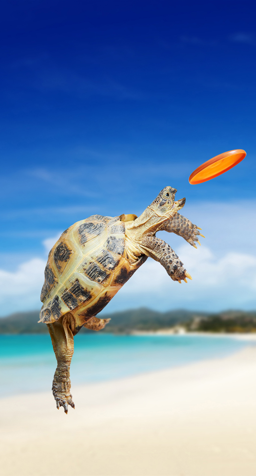 no person, one, fair weather, outdoors, action, leisure, hurry, reptile, turtle