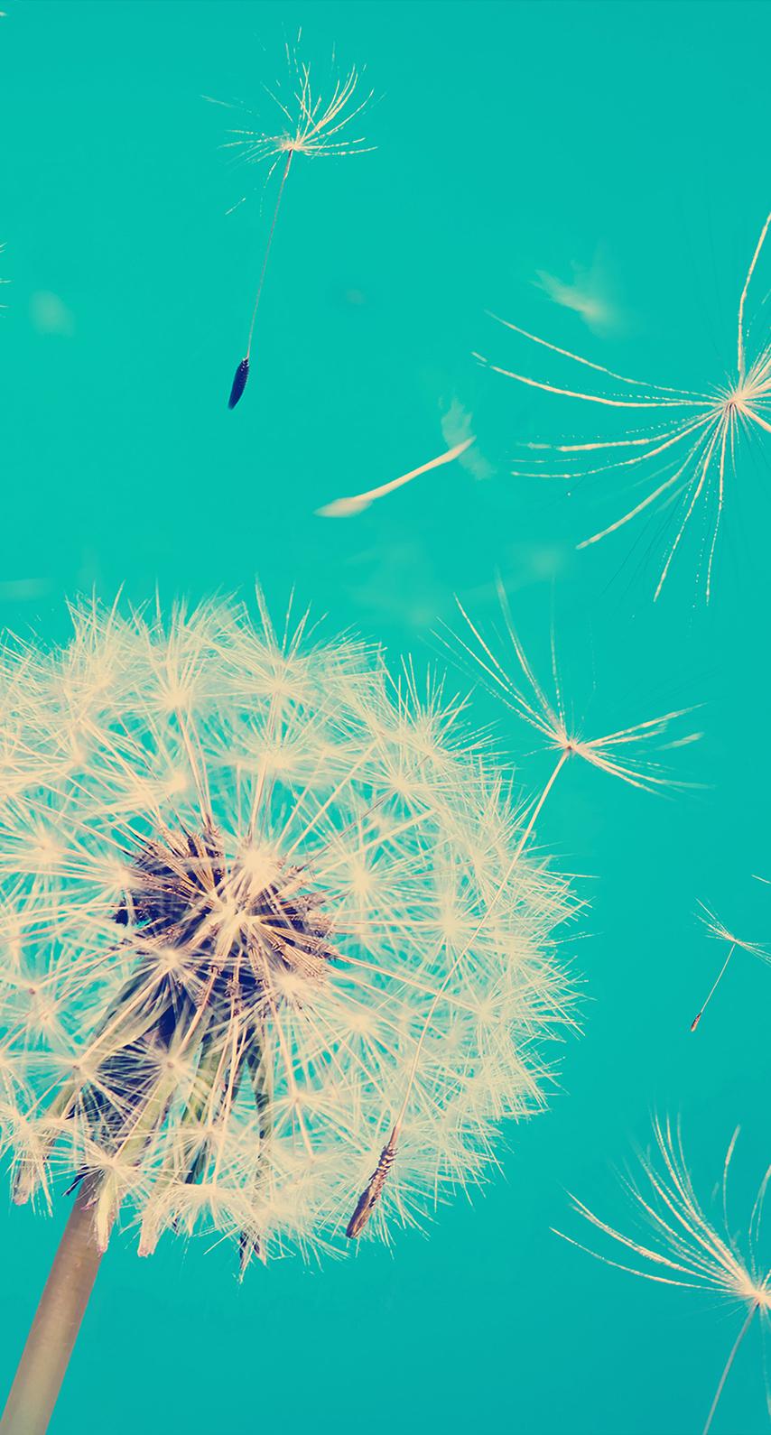 color, flora