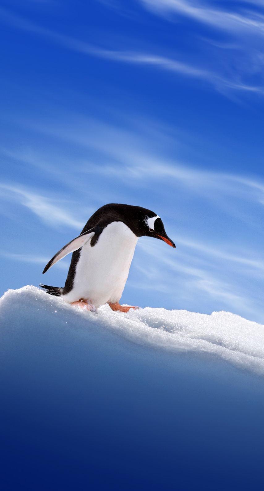 abstract, snow, frosty, ice, flight, art, animal, zombie, no person, one, outdoors, wildlife, penguins, cold