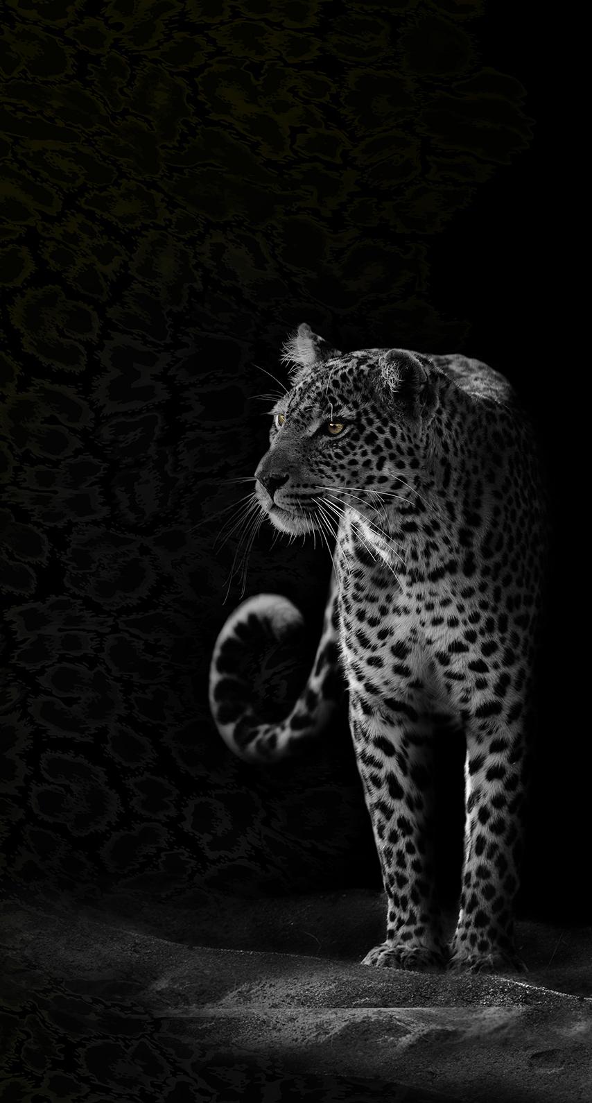 wild, animal
