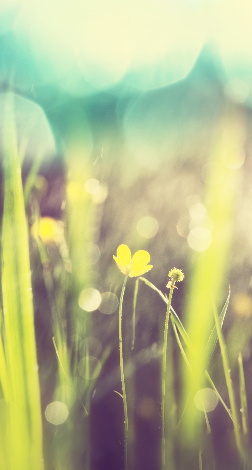 abstract, field, bright, summer, graphic, sun, blur