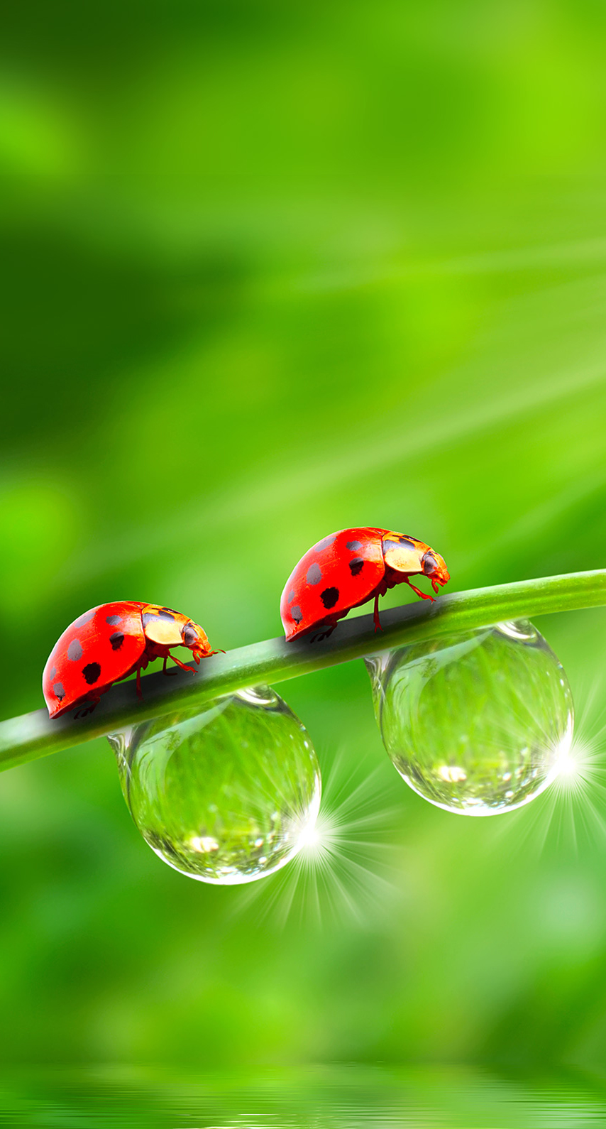 summer, flora, garden, purity, biology, environment, growth, moisture