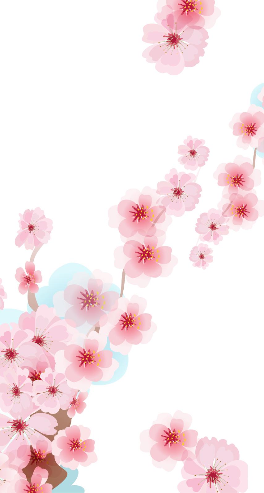 flora, blooming, petal, season, card
