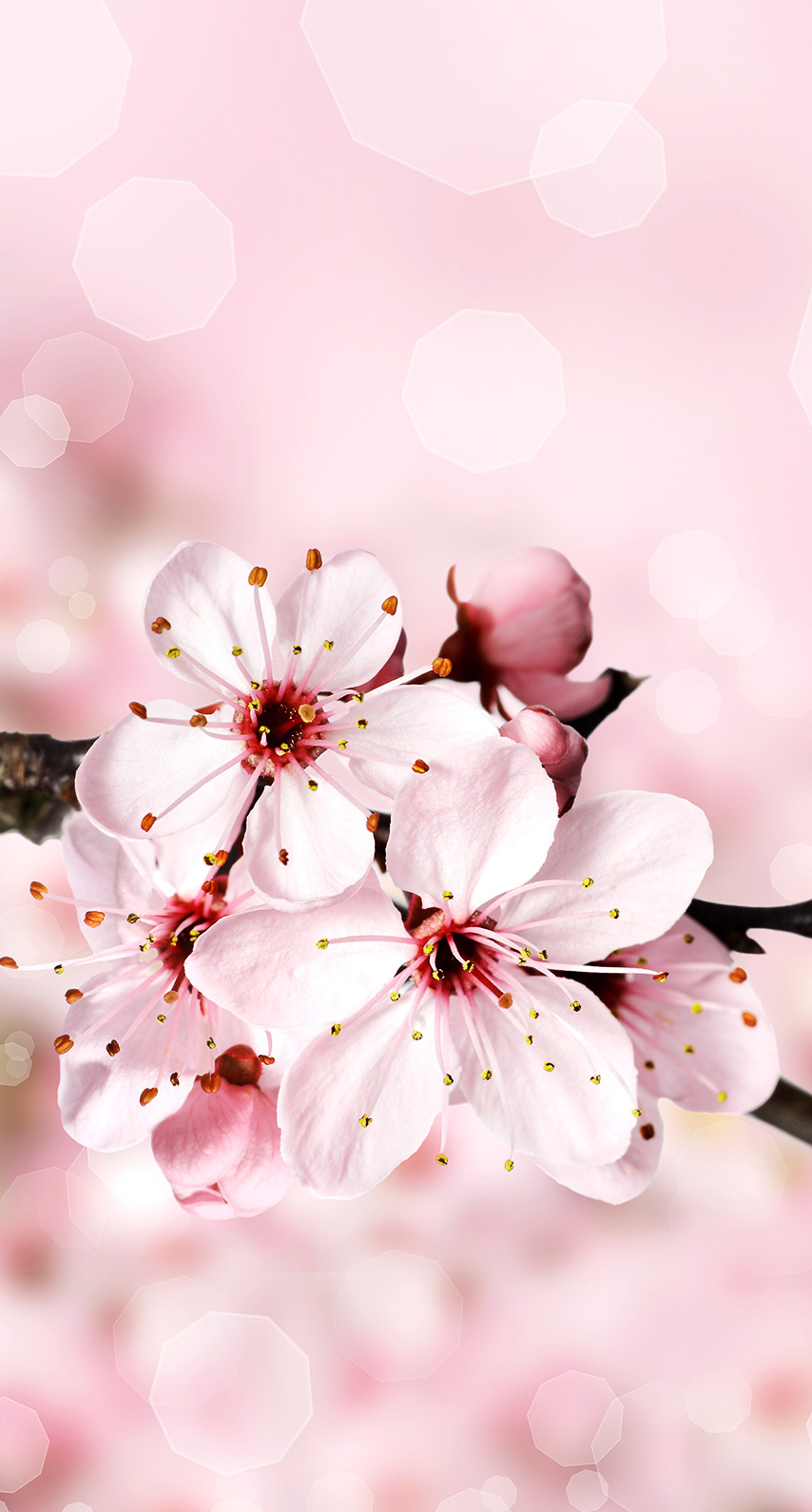 garden, blooming, petal, season, growth, plum, bud, apricot