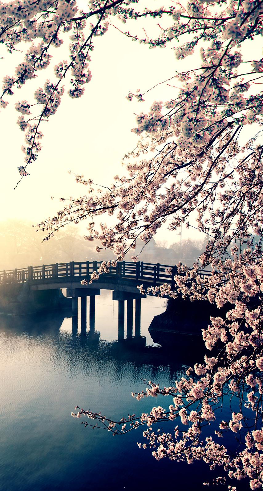 mist, composure