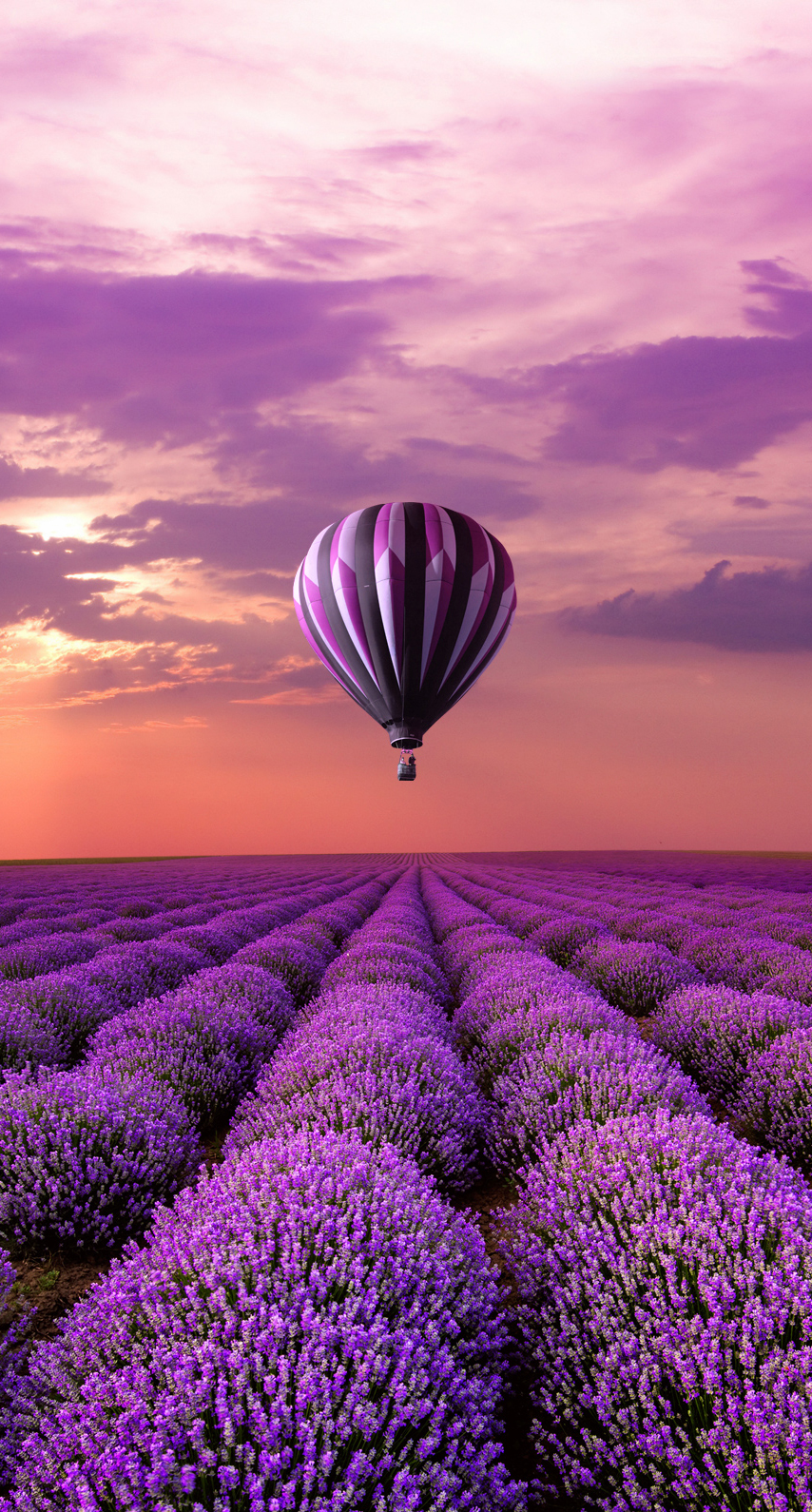 purple, beautiful, balloon, sunset, field, bright, summer