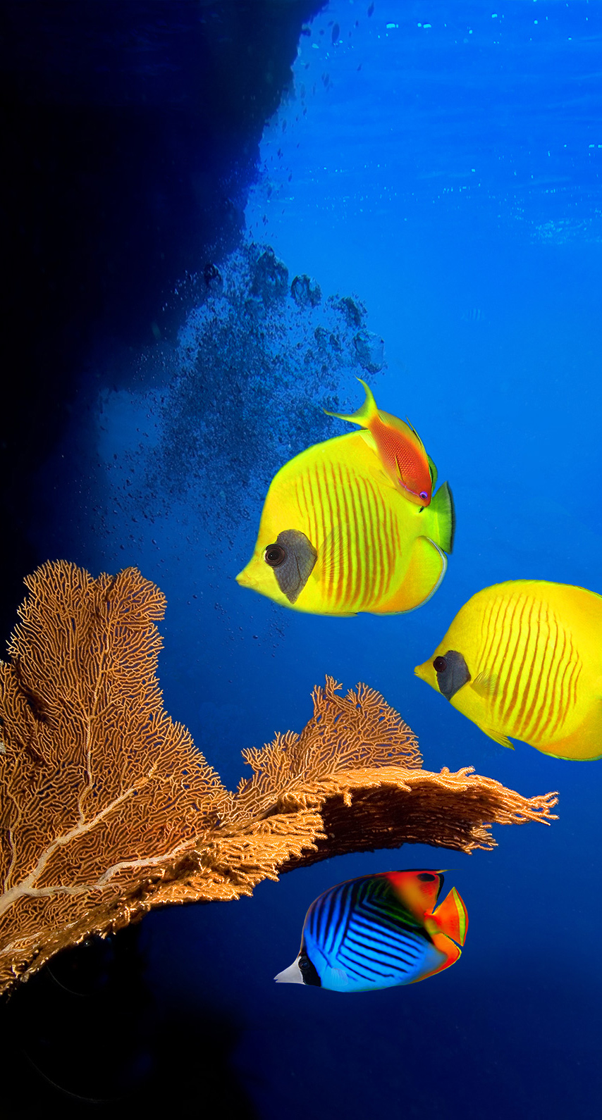 fish, tropical, diving, no person, one, color