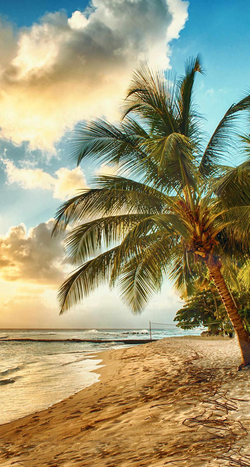 seashore, coconut