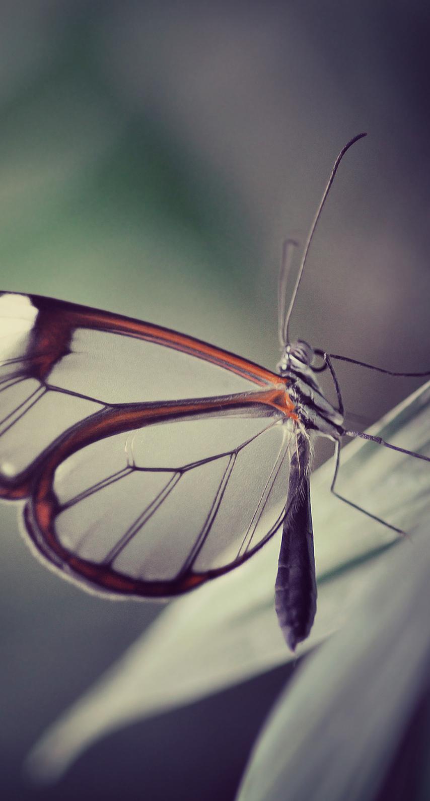 antenna, moth