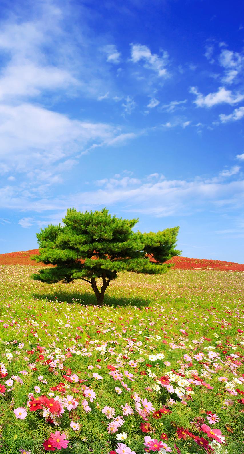 grass, tree