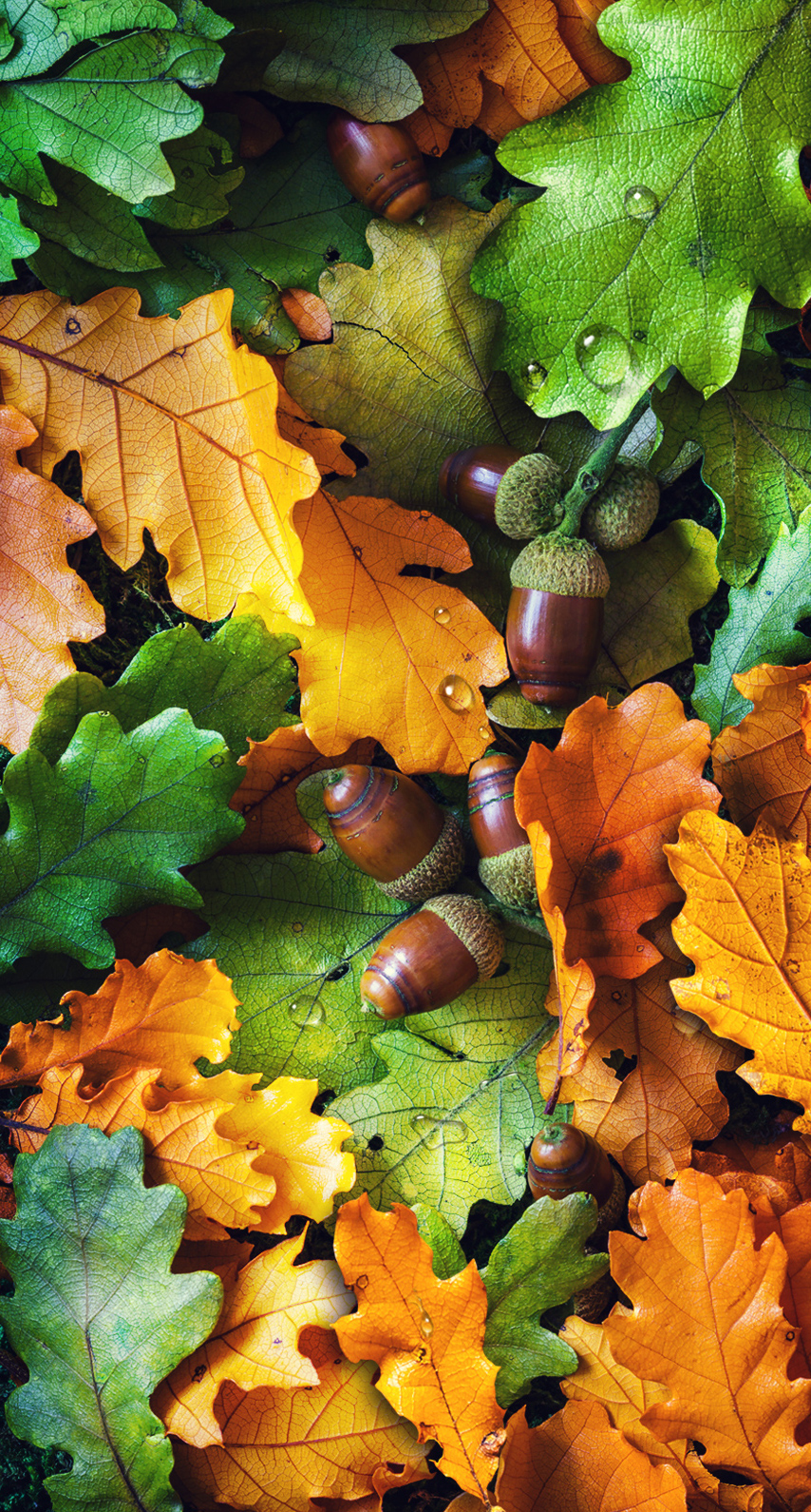 garden, closeup, season, vibrant, maple, oak, pasture, thanksgiving