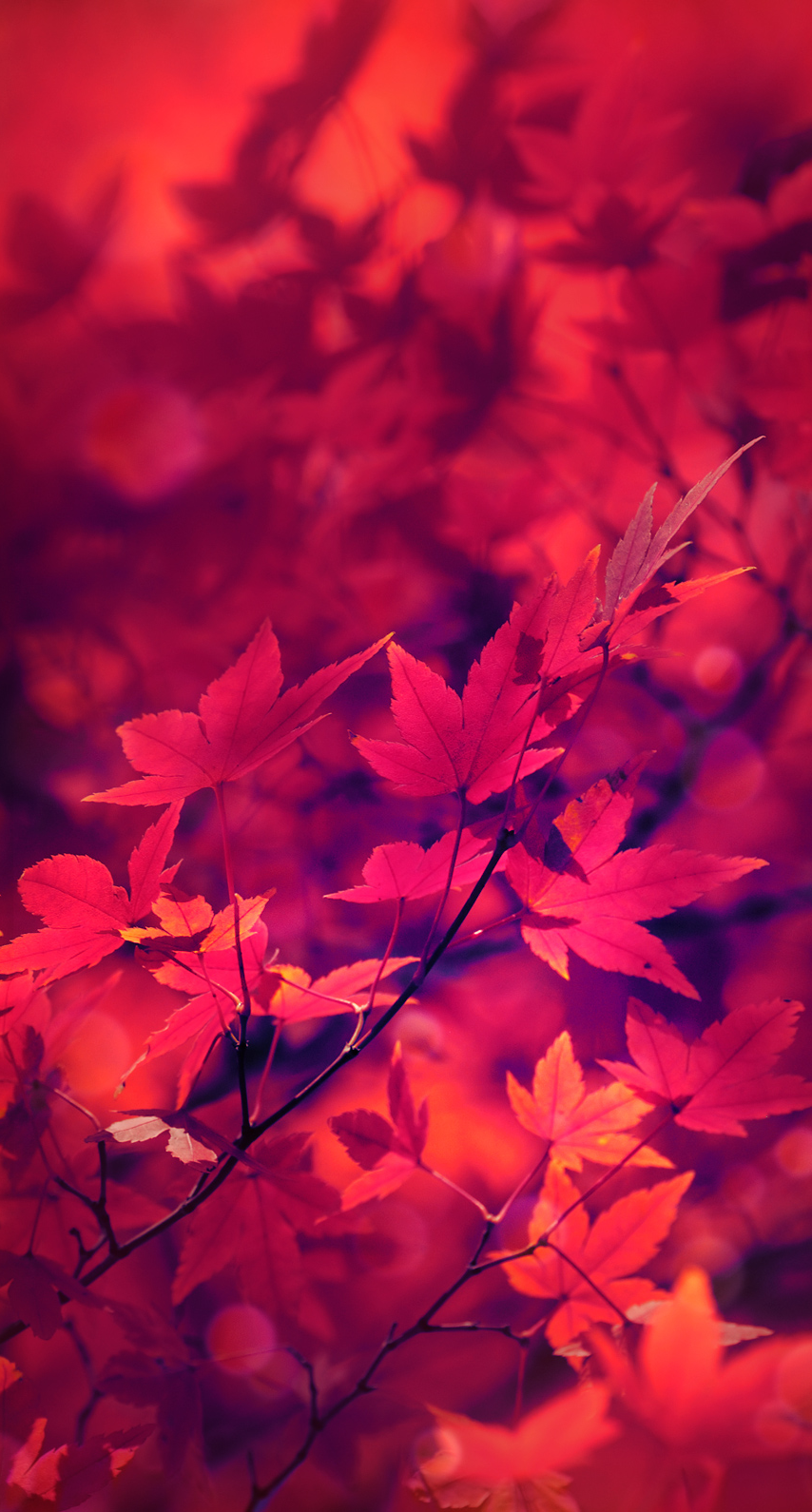 beautiful, leaves, leaf, abstract, fall