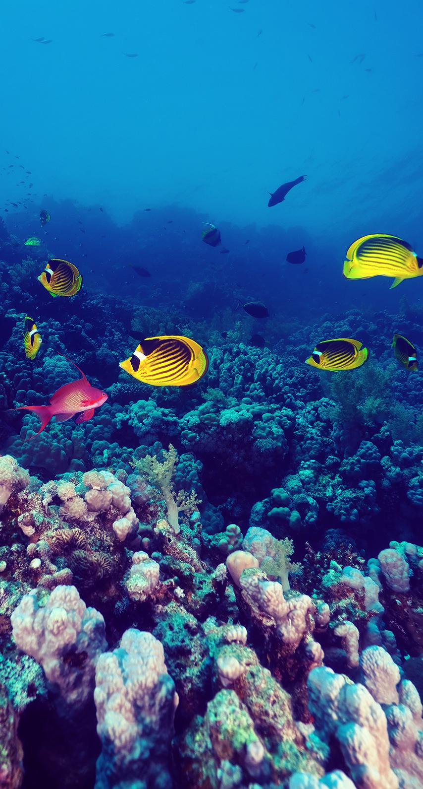 reef, snorkeling