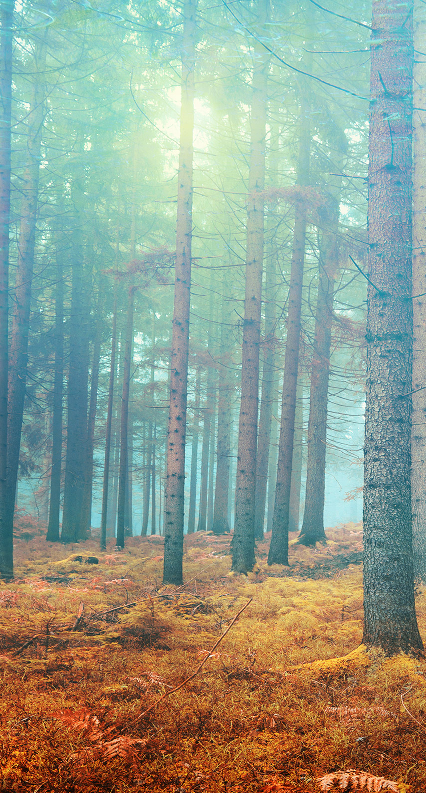abstract, forest, fall, light, dynamic, tree, branch, bright, artistic