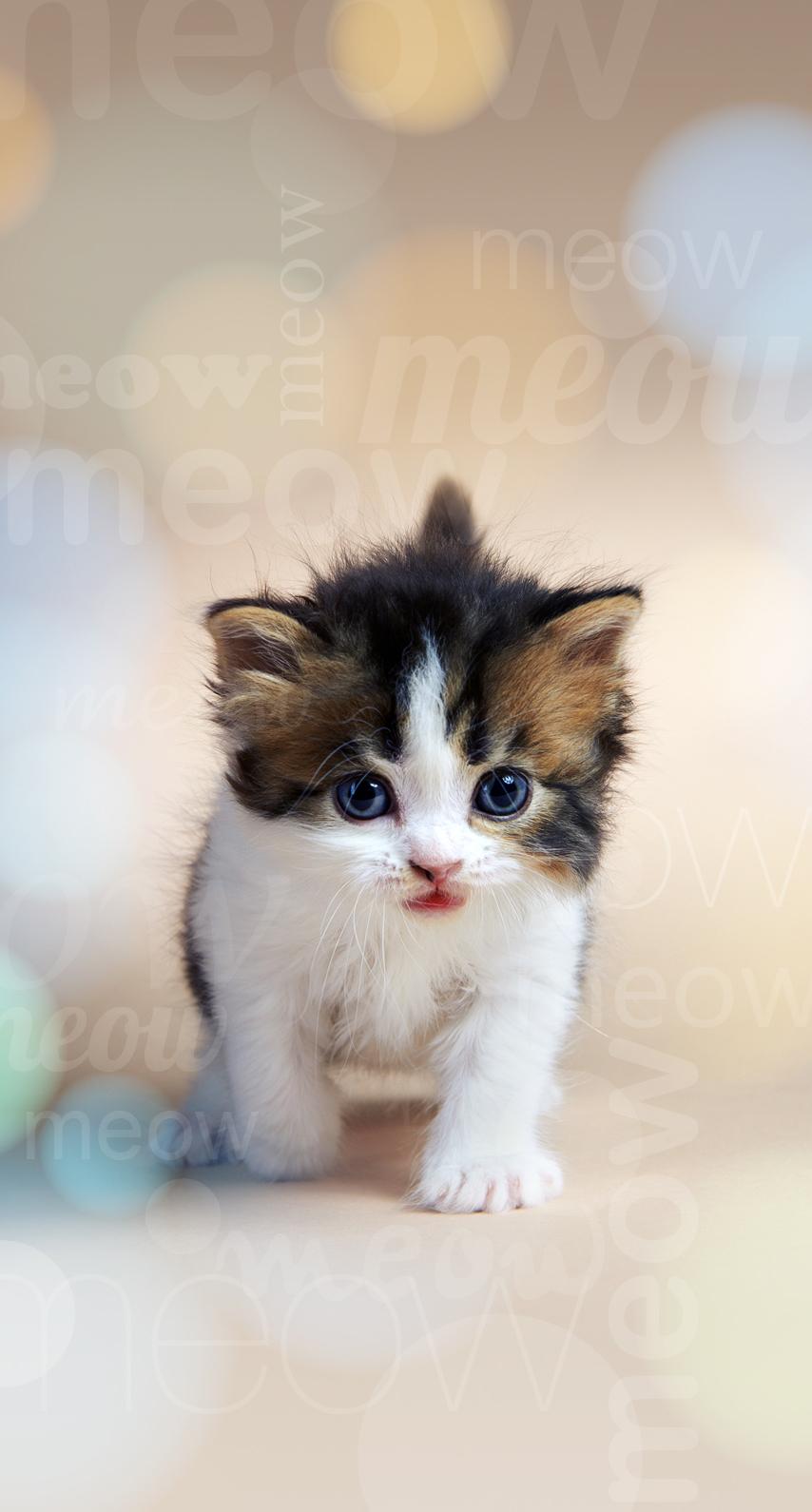 celebration, kitten, fur, animal, portrait, mammal, sit, little, young, baby, downy, looking, curiosity