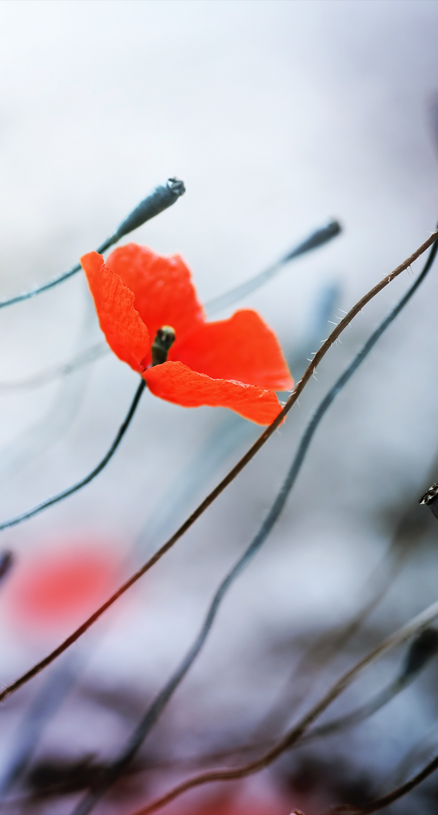 fall, tree, branch, bright, poppy, blur, no person, color, outdoors, flora, garden
