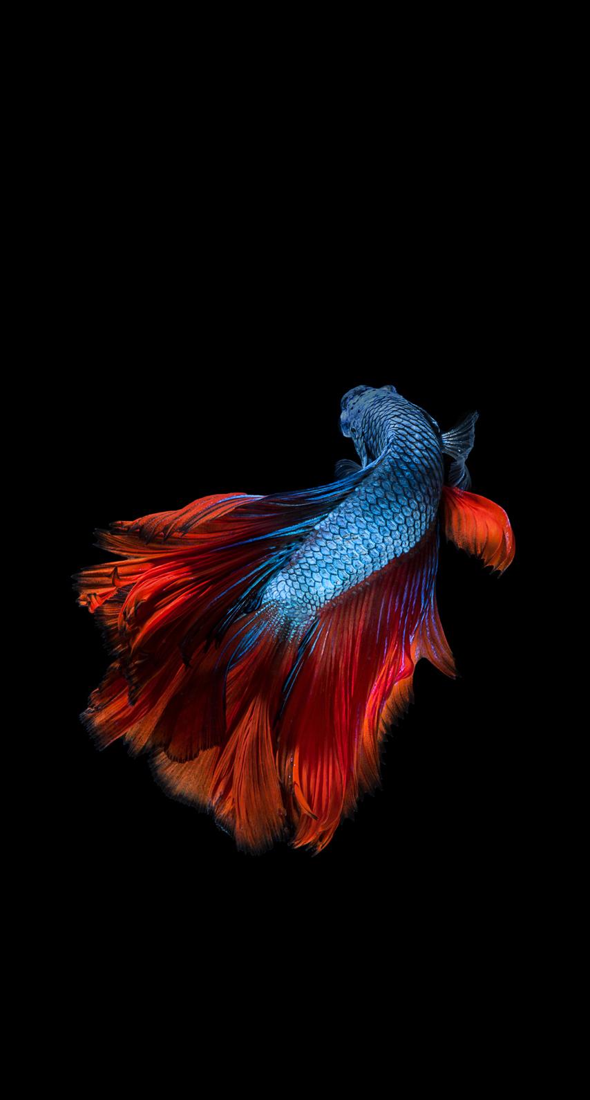 wildlife, aquarium