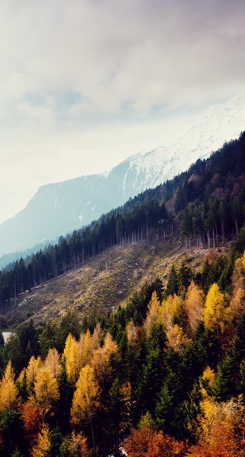 outdoors, daylight, scenic, conifer, hike