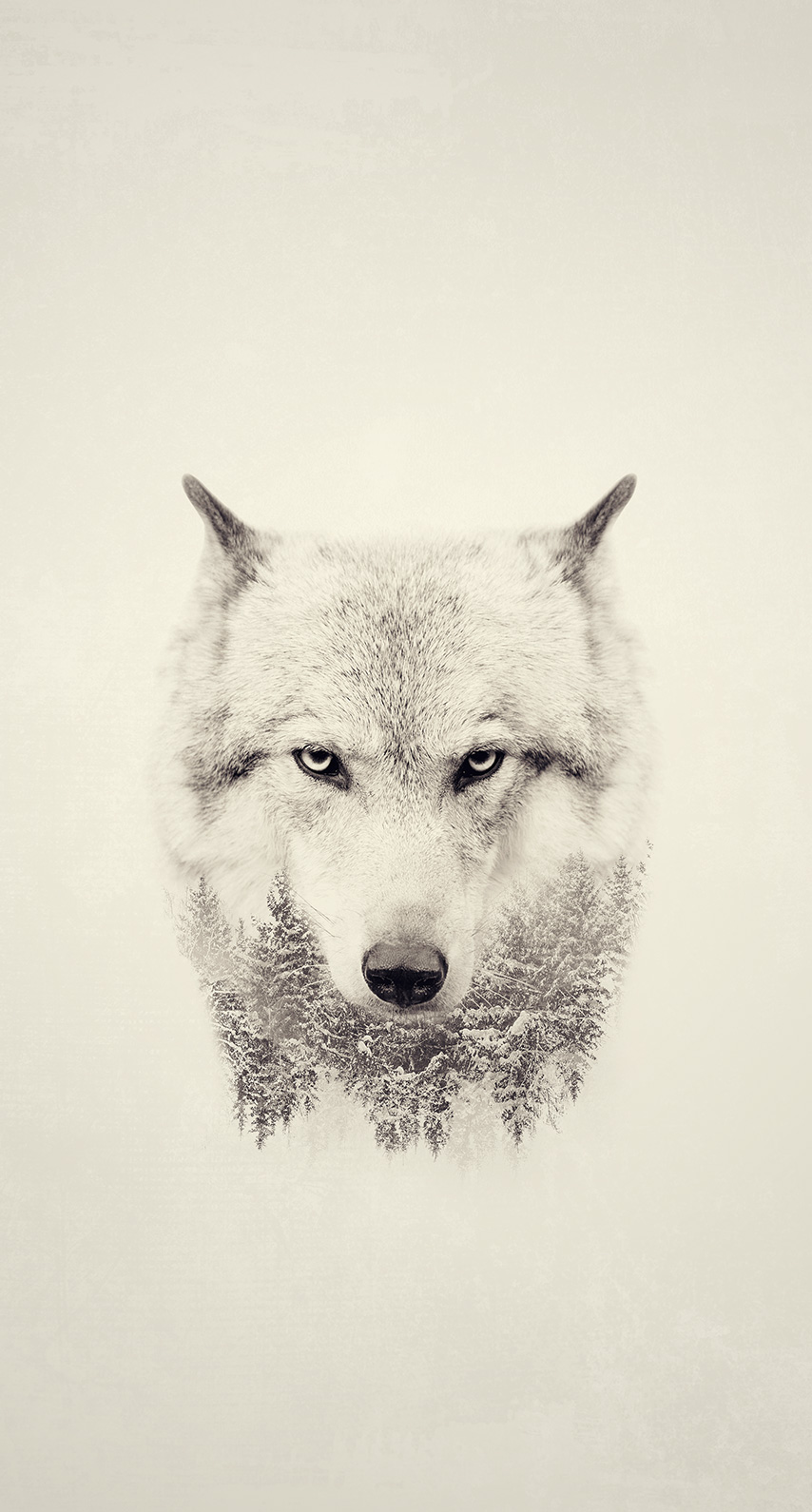 monochrome, portrait, wildlife, mammal, predator, canine, canis