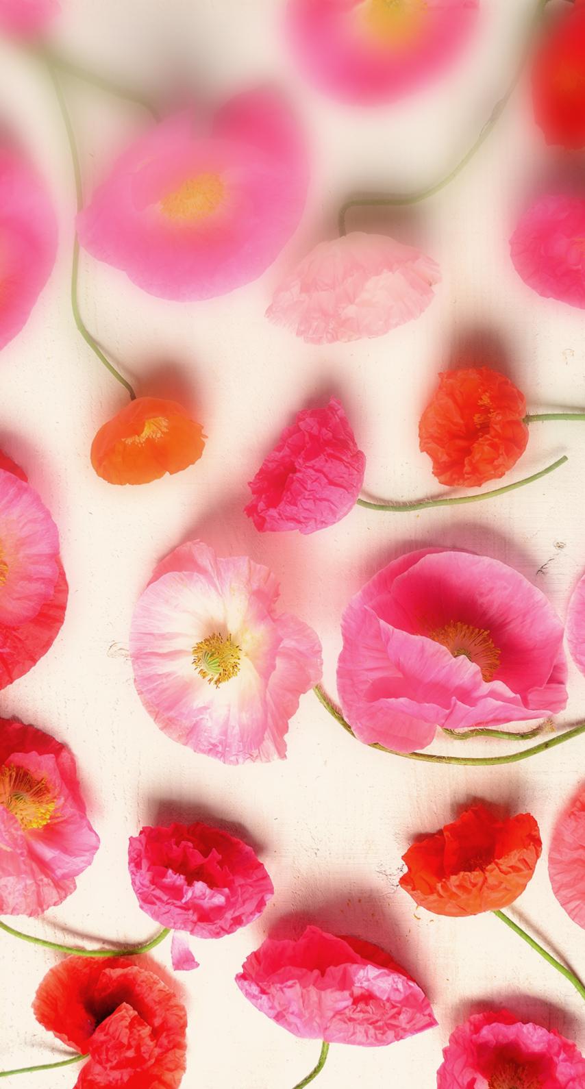 floral, poppy