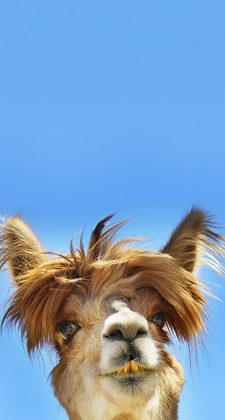 canine, hair