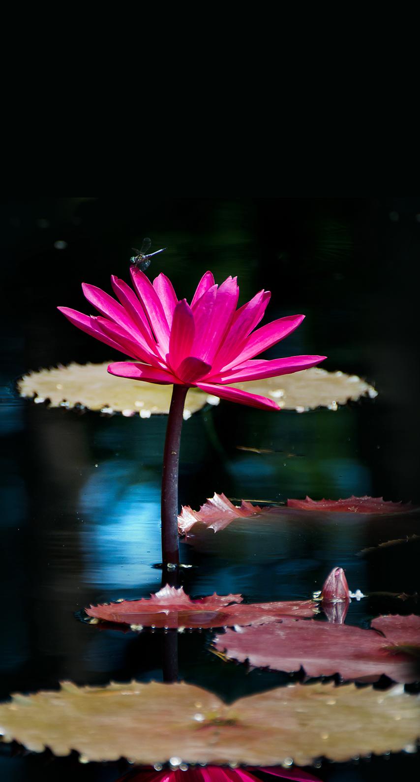 dark, beautiful, flowers, leaf, bright