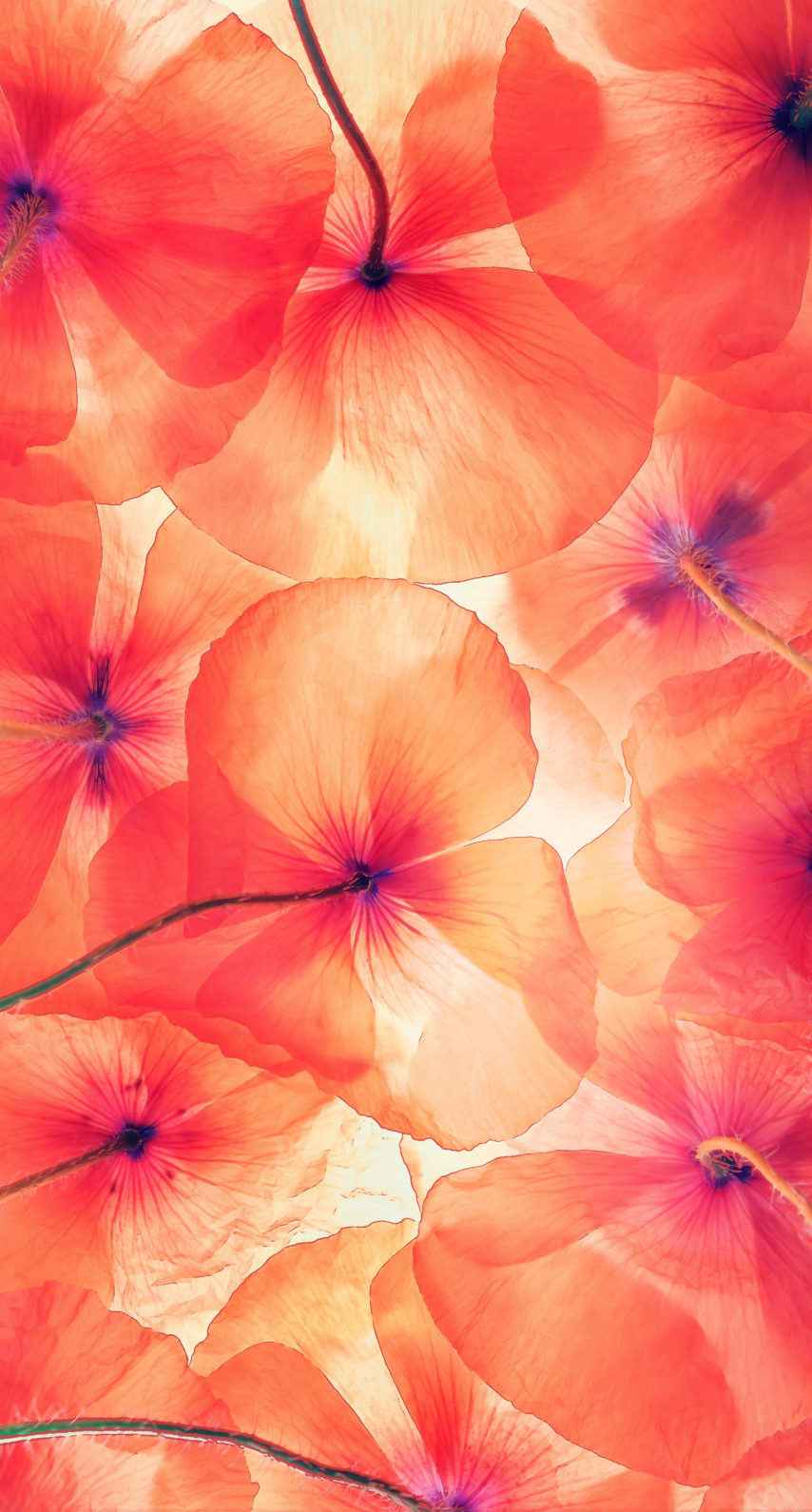 floral, tropical