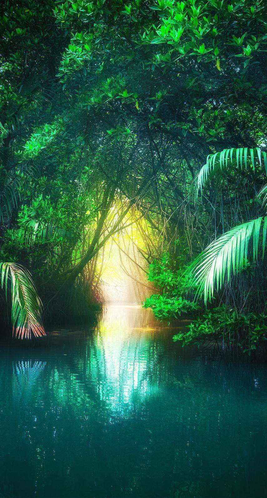tropical, summer
