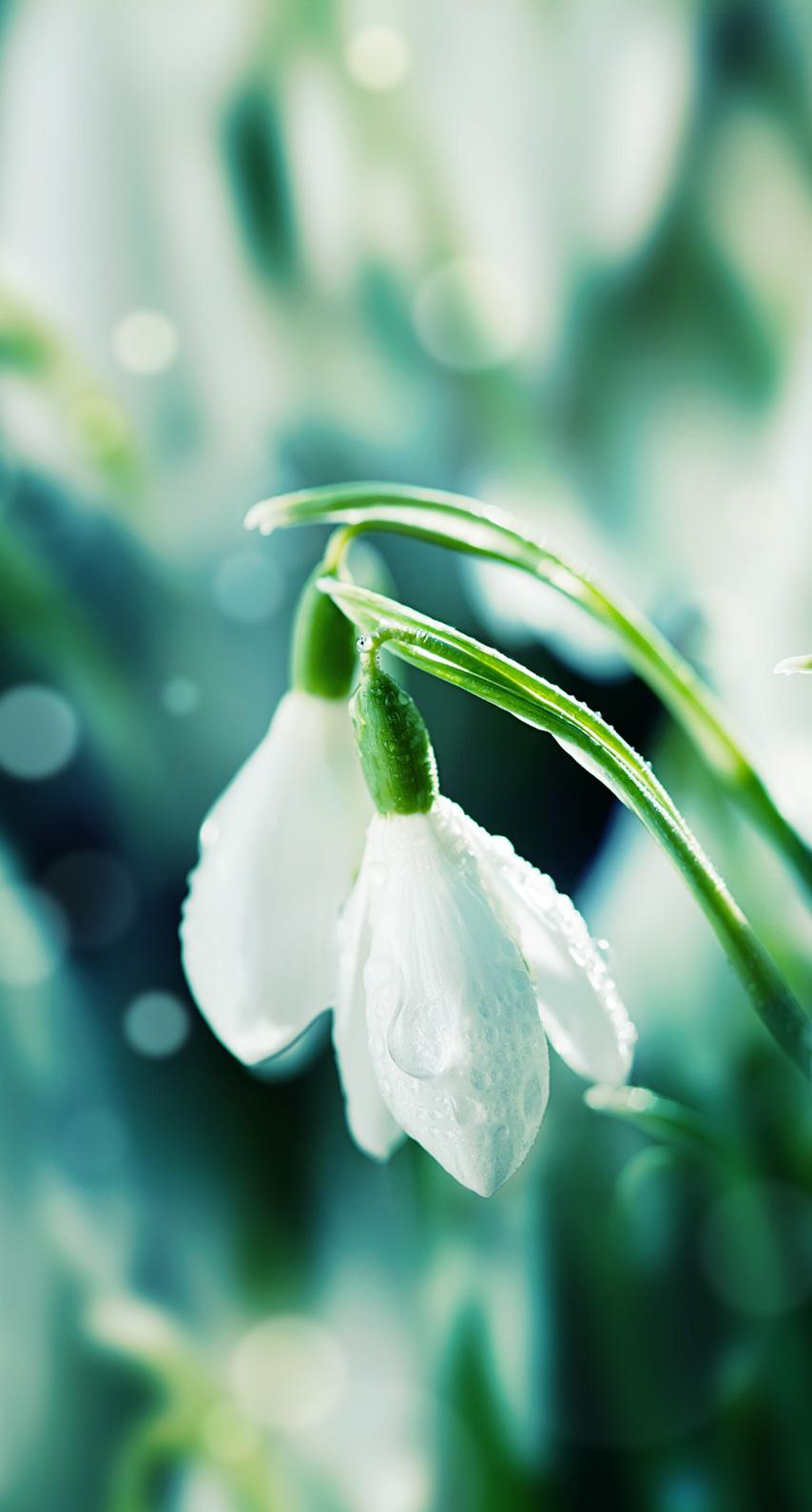 purity, growth