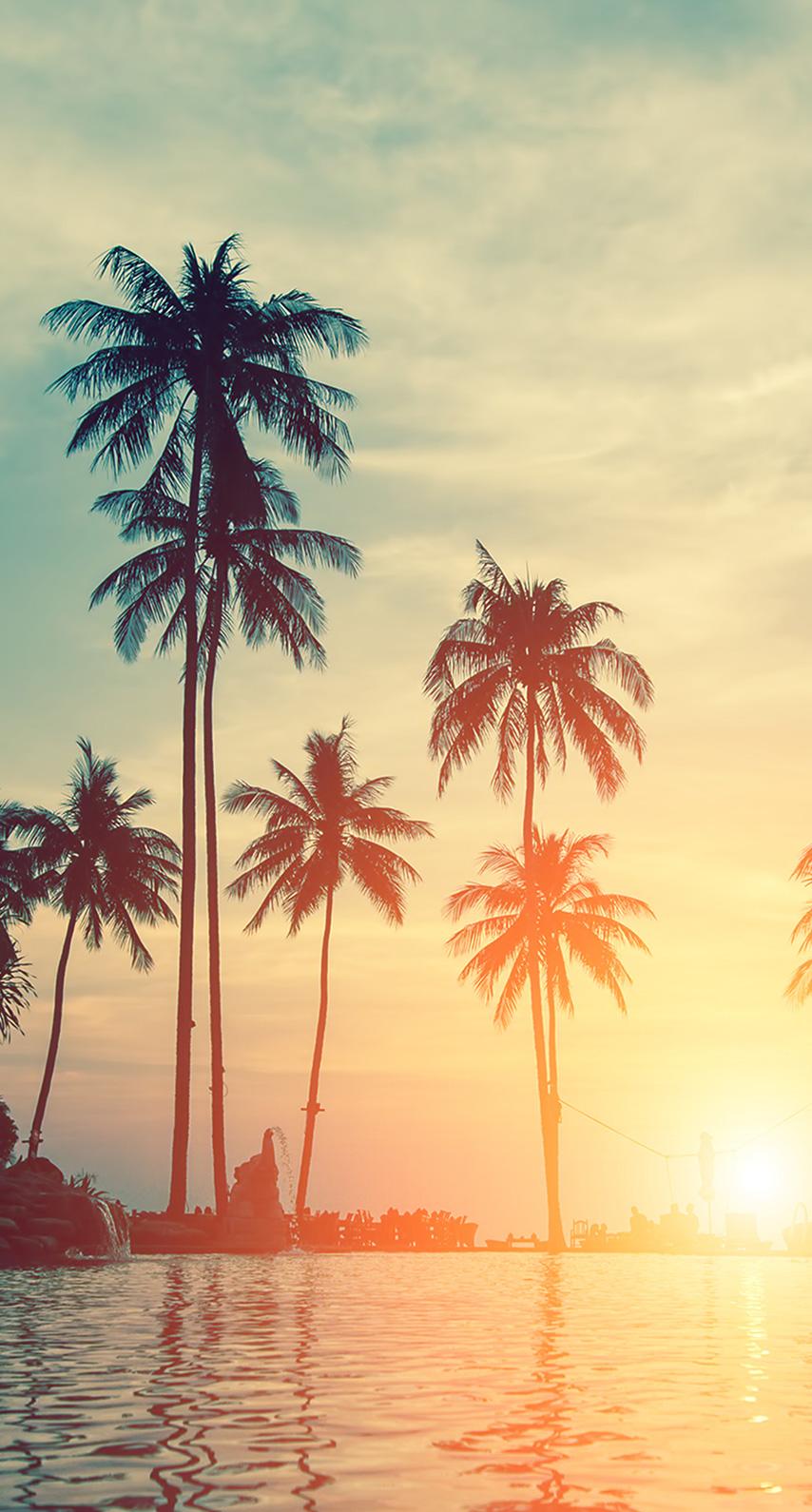 palmtrees, sun