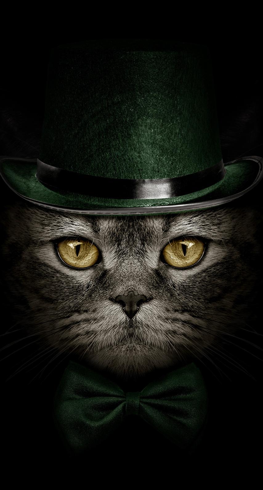 carnivoran, cat like mammal
