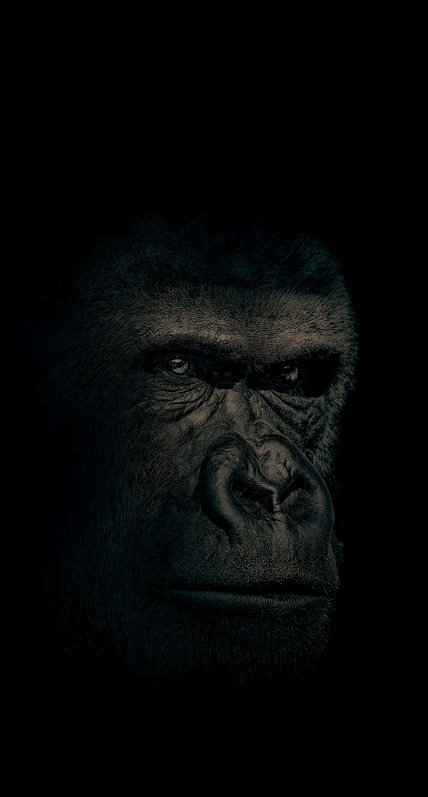gorilla, no person