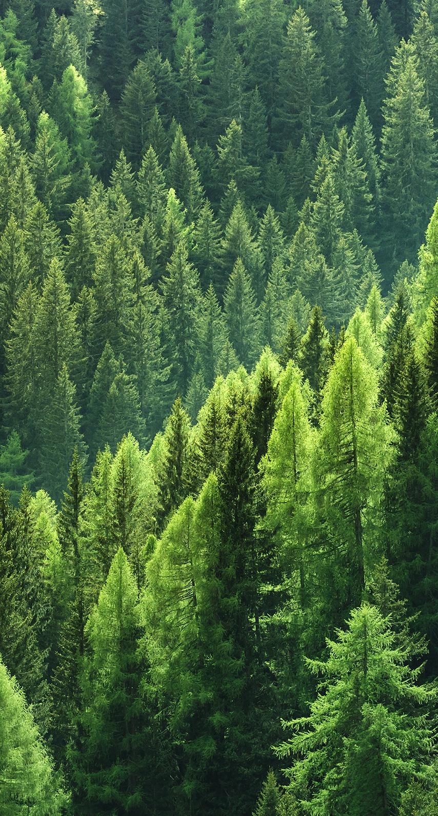 ecology, evergreen
