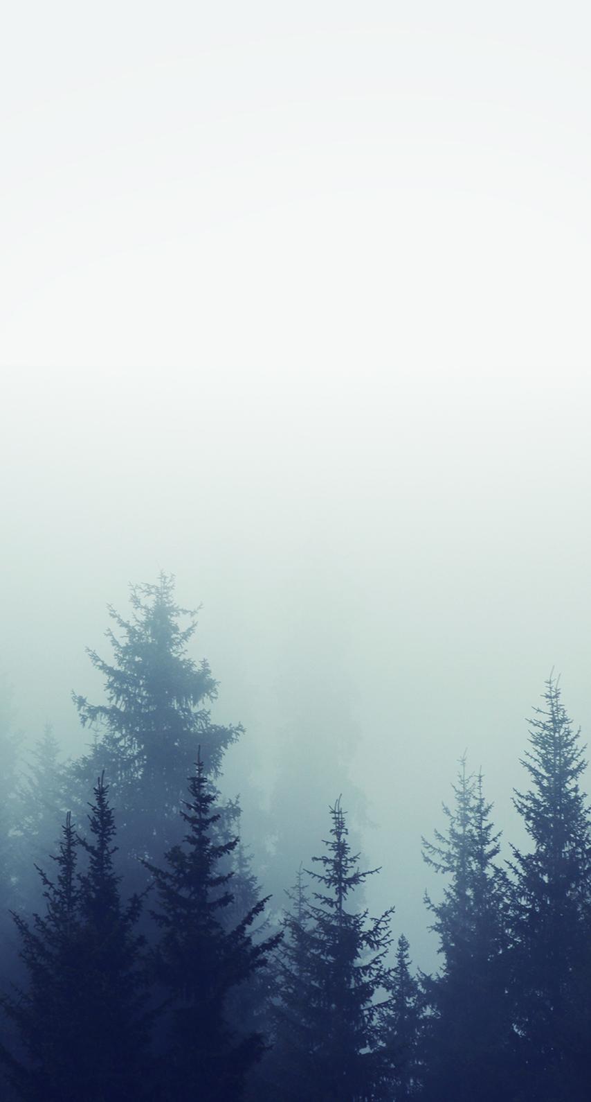 tree, mountain