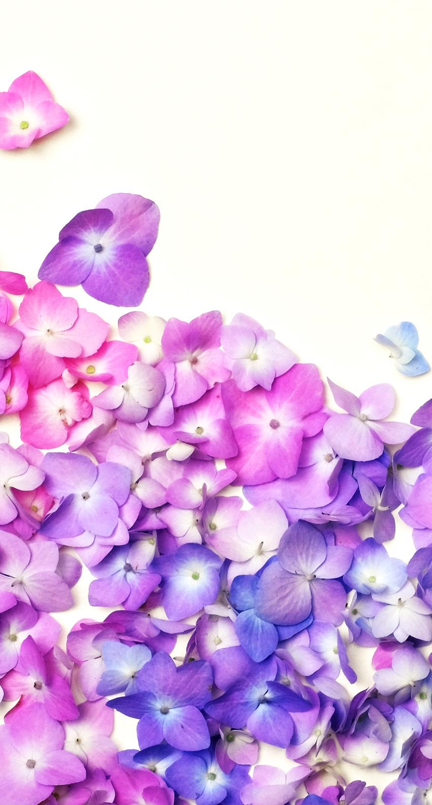 violet, flowers