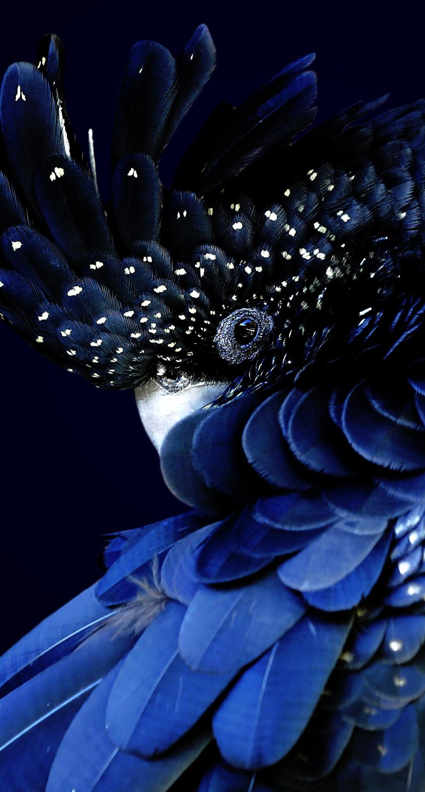 blue, bird