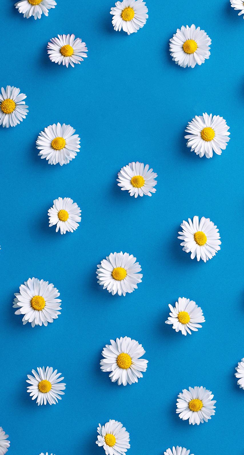 floral, daisy