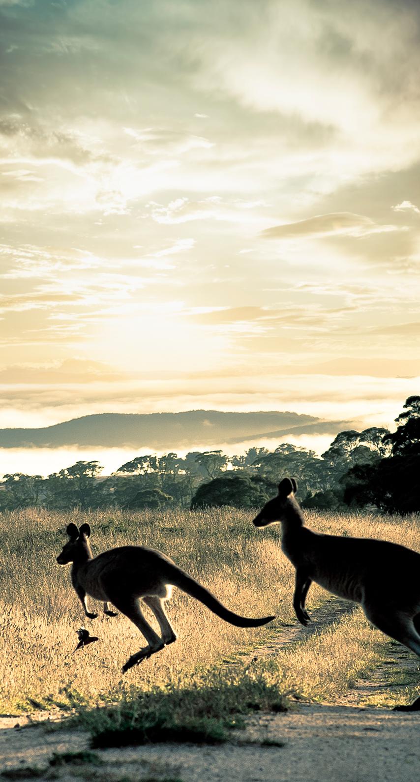 savanna, side view