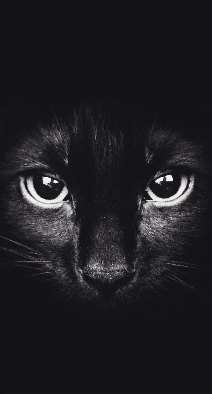 black, сat