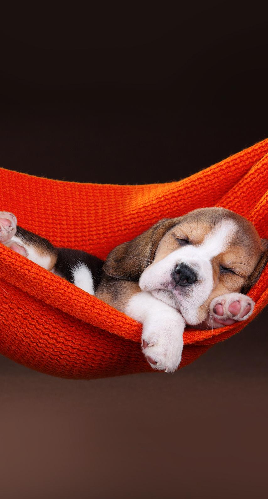 puppy, sleep