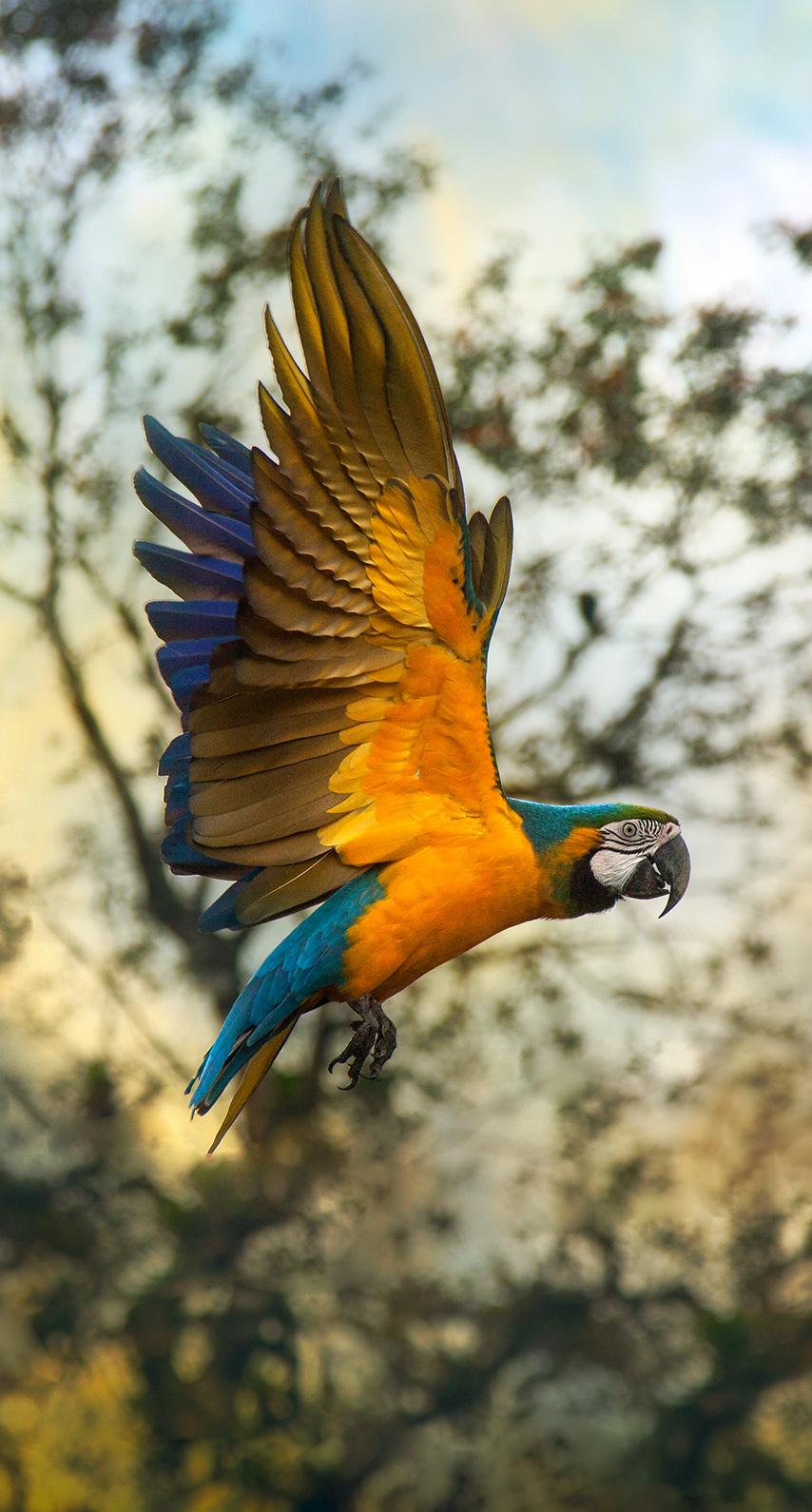 bird, parrot