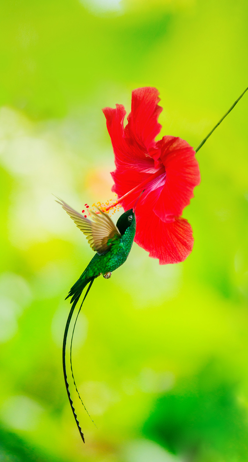 bird, hummingbird