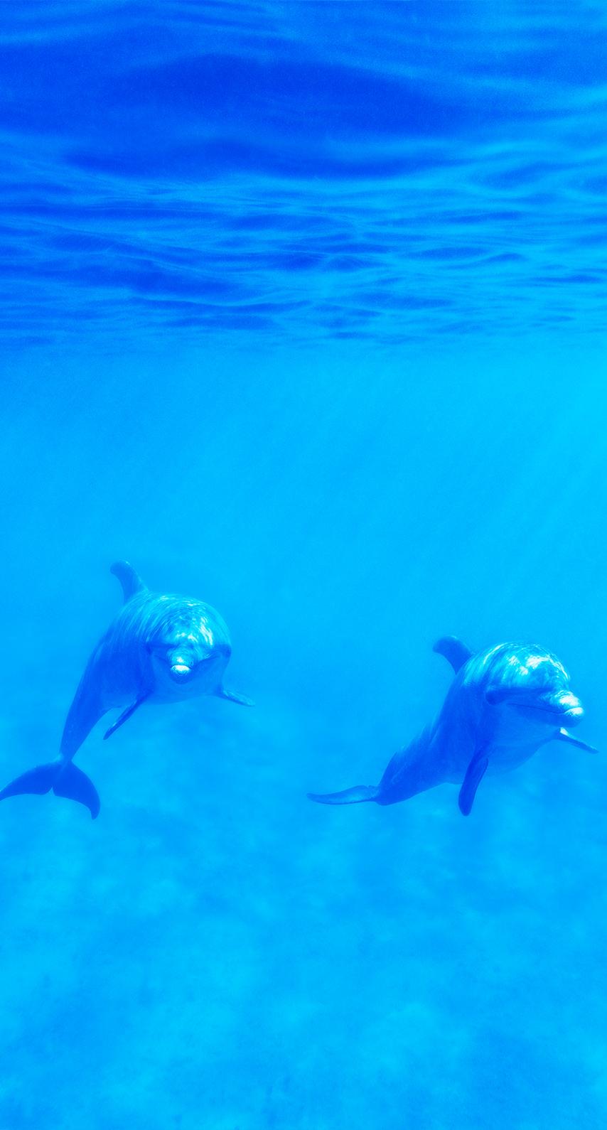 wildlife, underwater