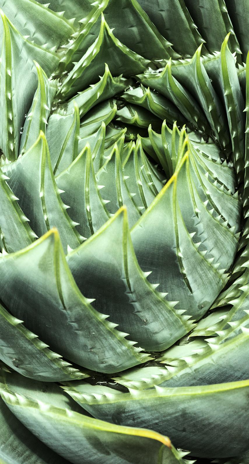 close-up, cactus