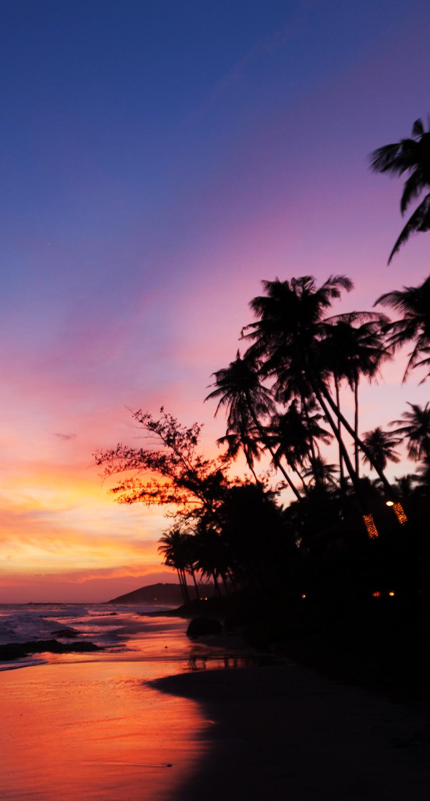 palms, night