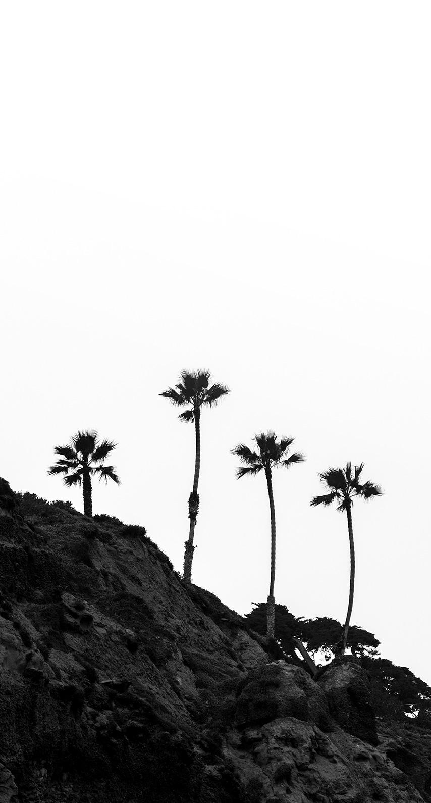 palms, bnw